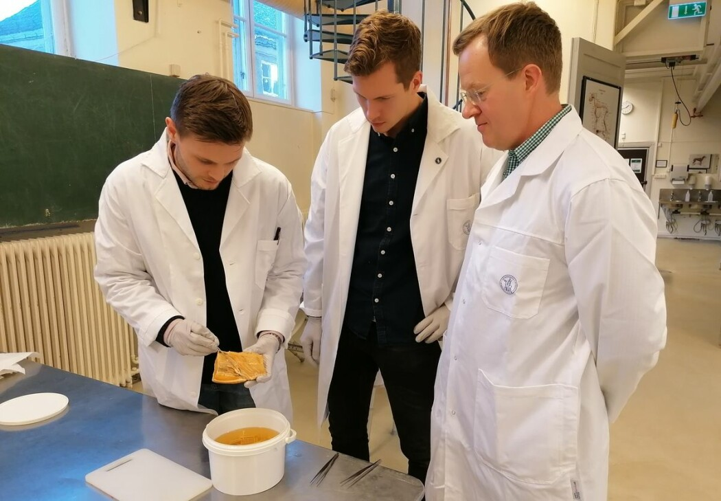 Fra venstre: Student Oskar Mongstad Løken, stipendiat Håvard Bjørgen og professor Erling Olaf Koppang har alle vært sentrale i studien etter oppdagelsen av det nye organet.