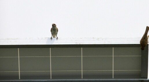 Liker fuglene moderne arkitektur?