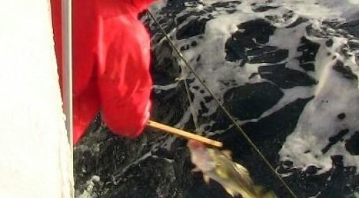 Betaler mer for fisk fanget på krok