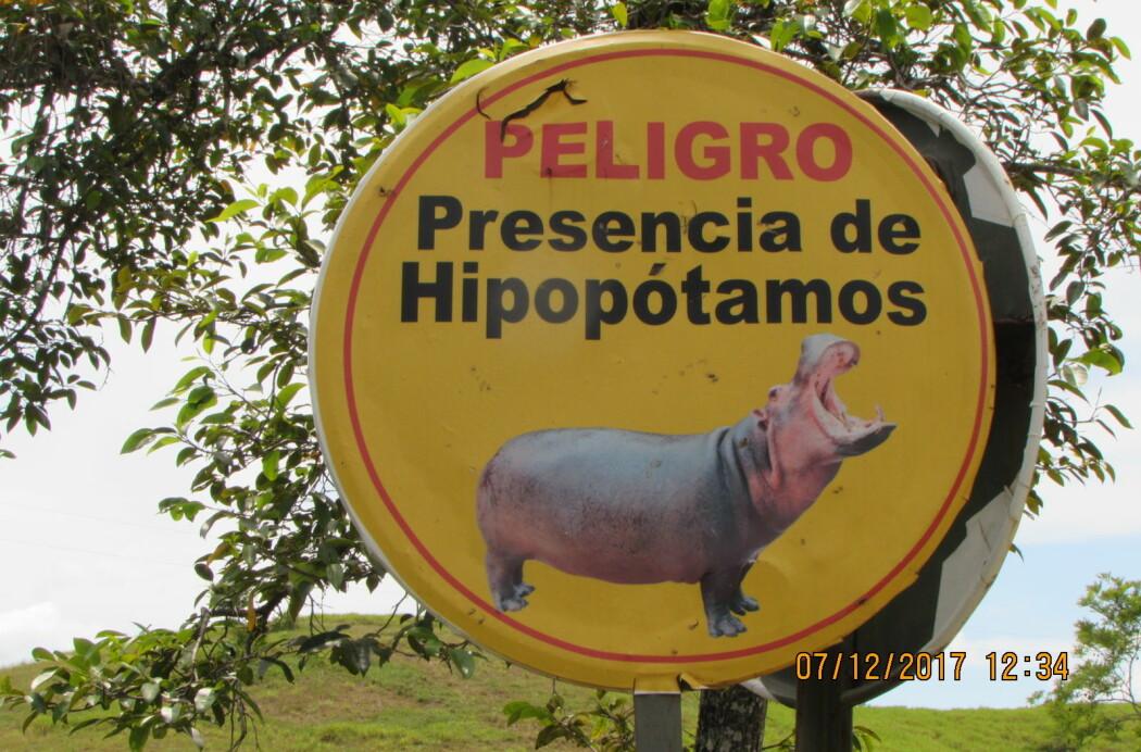 Turister advares mot flodhestene som bor i Magdalenaelva i Colombia. Dyrene stammer fra fire flodhester som ble importert av Pablo Escobar.