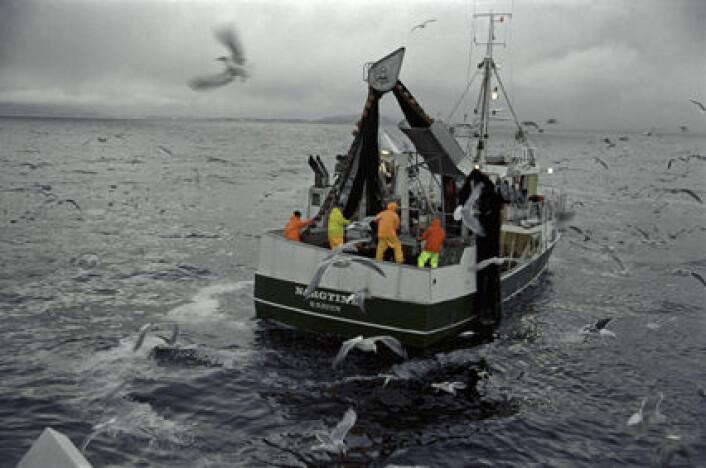 Fiskeryrket er blitt mer stabilt og forutsigbart, men det vil alltid være noen som ikke kan tenke seg et åtte-til-fire-liv. (Foto: Jean Gaumy, Seafood.no)