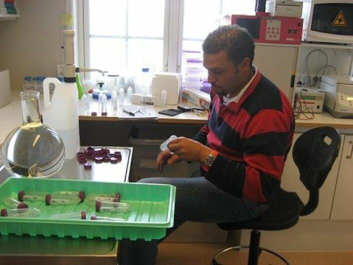 Foredlerne leter alltid etter gener og mer effektive metoder som gir frostsikre bær. Forsker og jordbærforedler Muath Alsheikh ved det nasjonale planteforedlingsselskapet Graminor. (Foto: Graminor)
