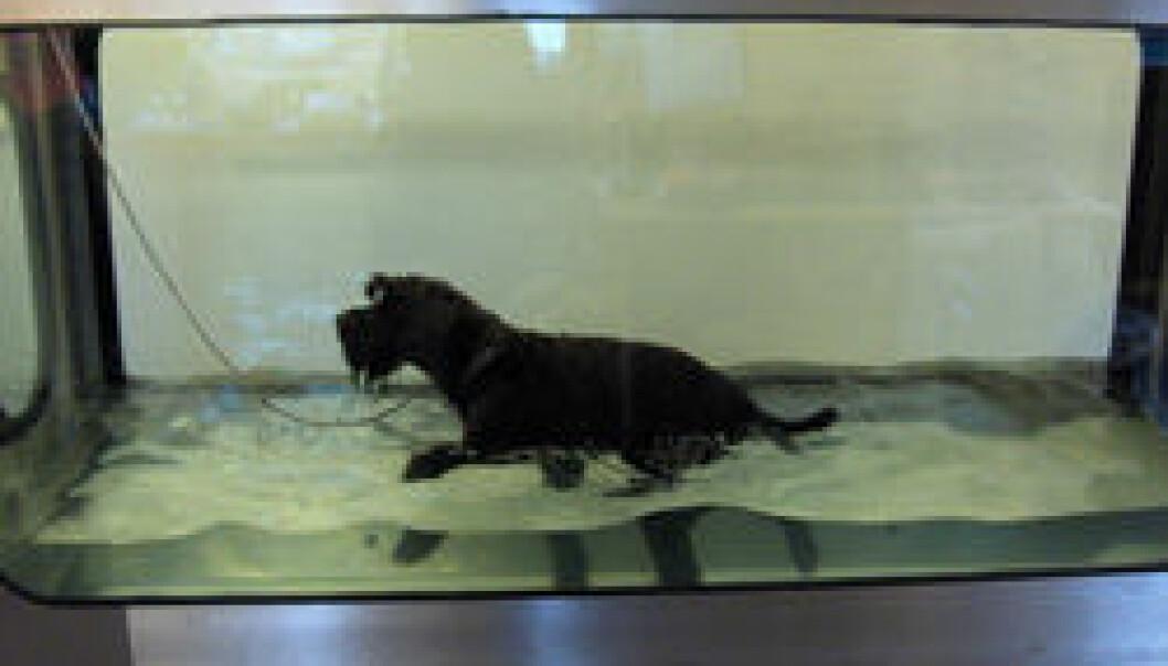Hunder er friskere og lever lenger