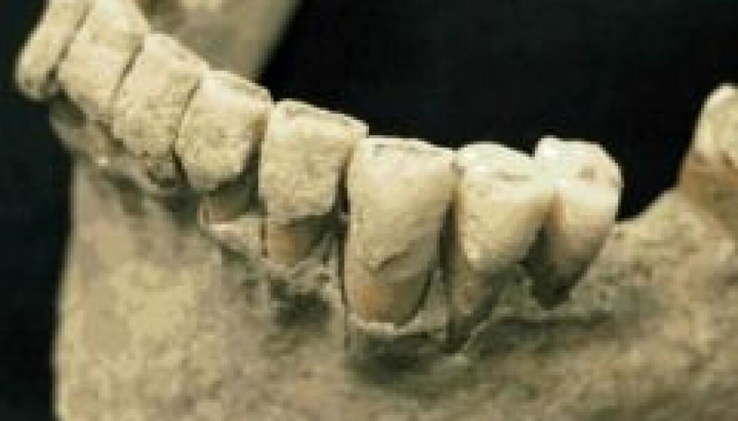 Fant fossil tannstein