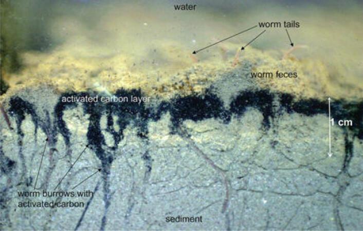 """""""Bildet viser hvordan aktivt kull binder seg til de øverste lagene i bunnsedimentene. (Ill.: Updal Ghosh, Univ. Maryland)"""""""