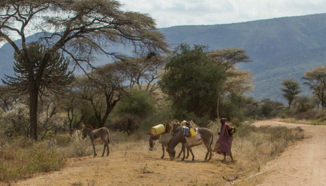 Dyrelivet i Serengeti og Mara er rikt ennå, men det er stadig konflikter mellom mennesker og dyr.