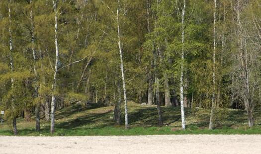 Svensk skogmyndighet: Varierte skoger, mindre flatehogst og færre kjøreskader viktige klimatilpasninger