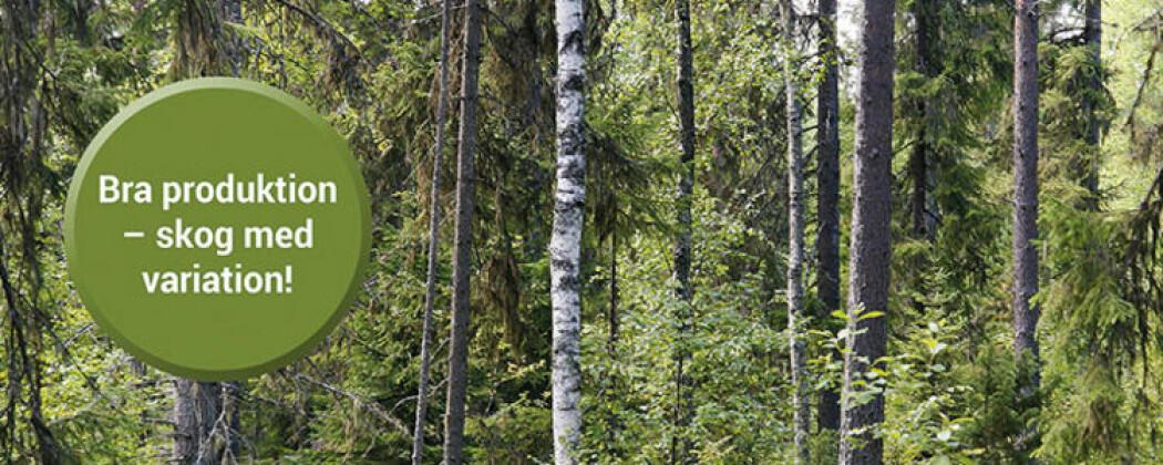 """Skogsstyrelsens visjon er """"Skog til nytta för alla""""."""