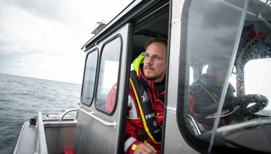 Havforsker Keno Ferter har merket fem pigghåer i sluttfasen av svangerskapet.