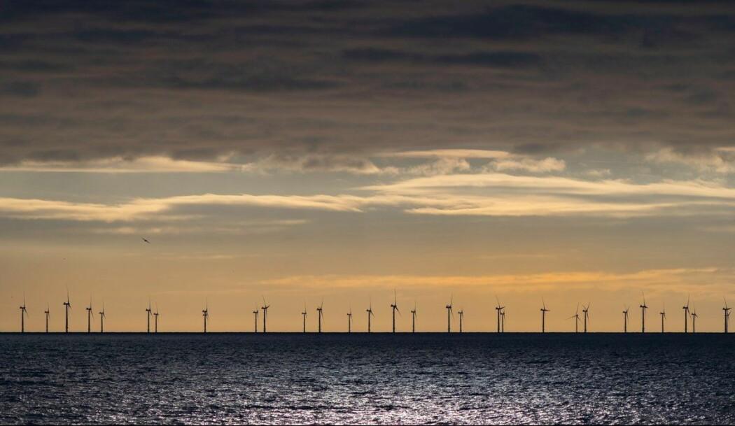 Forskarar veit enno lite om dei effektane vindkraft kan ha på miljø og økosystem i havet.