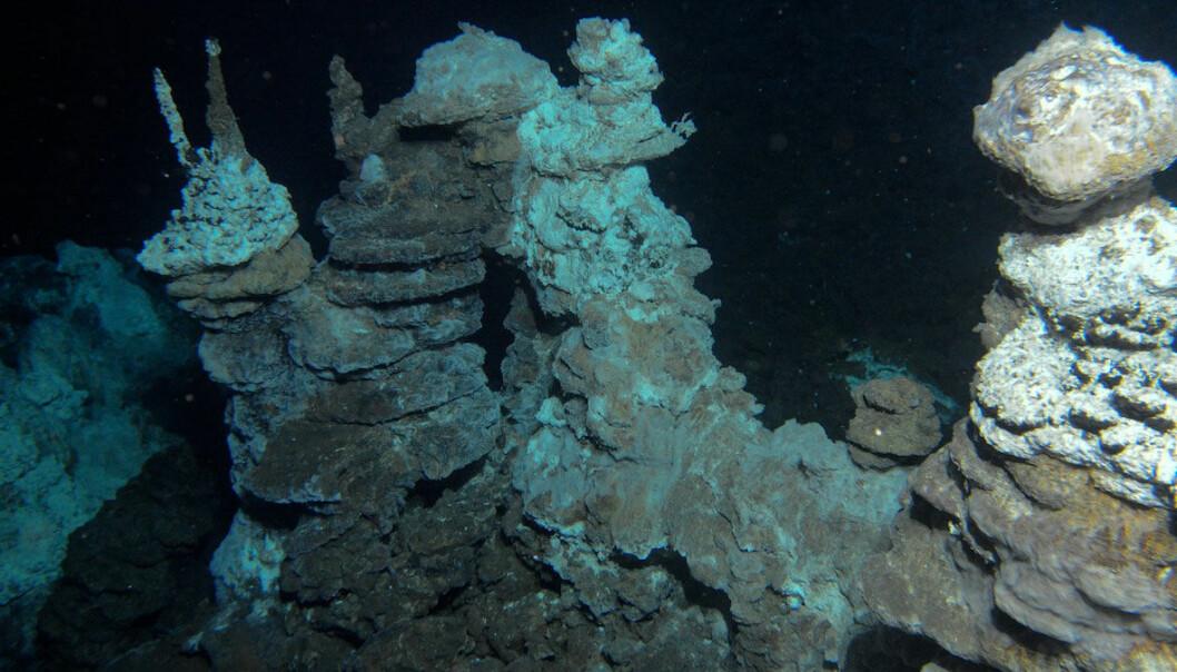 """Fra """"skorsteiner"""" på havbunnen strømmer det ut varmt vann som har skapt en unik fauna i området. Senter for geobiologi, UiB"""