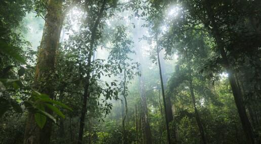 De tropiske regnskogene tar opp mindre CO2, men barskogen i nord tar opp mer enn før