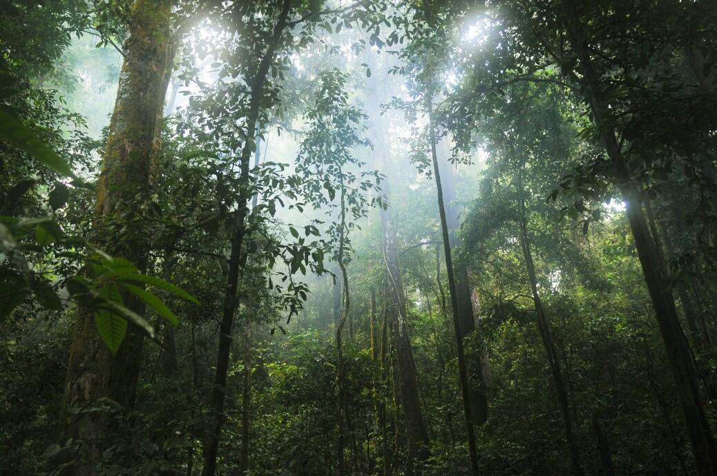 Regnskogene har de siste årene hatt et redusert inntak av CO2.