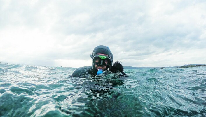 Dykker med kråkebollefangst.