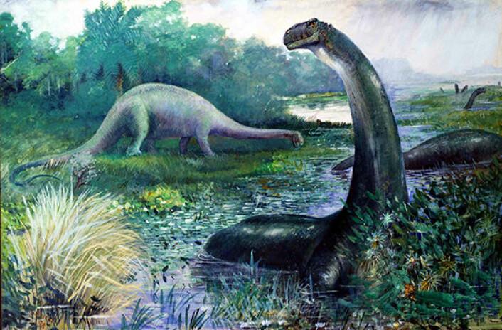 De tidlige paleontologene trodde at apatosaurusen var for tung til å leve på landjorda, og at de i stedet holdt til i sumper. Nyere forskning viser at dette ikke stemmer. I denne illustrasjonen fra 1897 er dinosauren også fremstilt med feil hodeform og kroppspositur. (Foto: Illustrasjon: Charles R Knight)