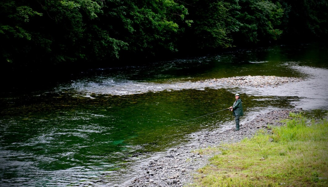 På sin vei tilbake til gyteplassen må villaksen noen ganger passere en laksefisker, som her i Etneelva.