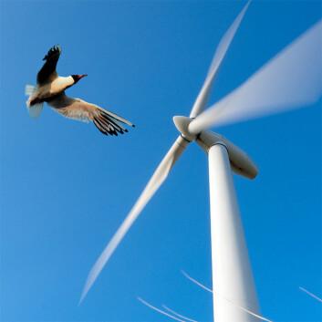 Miljøvennlig energi, men er den fuglevennlig? (Illustrasjonsfoto: Colourbox)