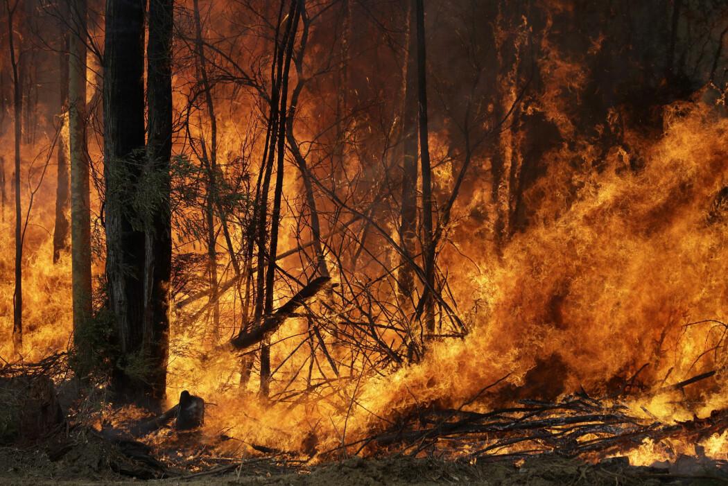 FNs klimapanel legger til grunn en oppvarming på nær fem grader i sitt verst tenkelige scenario for år 2100. To klimaforskere mener dette er misvisende. Her fra en av brannene i Australia i år.