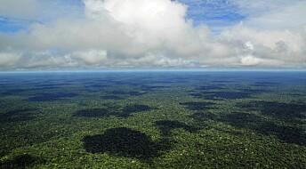 Flere hundre år gamle trær kan vise spor etter mennesker