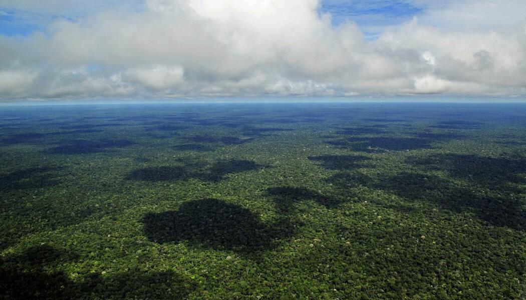 Tredekket i Amazonas-regnskogen.