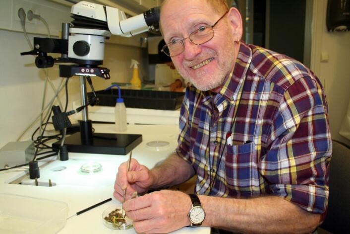 Christer Magnusson ved Bioforsk er en ledende ekspert på nematoder, og angrer ikke en dag på valget av fagfelt. Her arbeider han med en planteprøve angrepet av kroknematoder. (Foto: Asle Rønning)