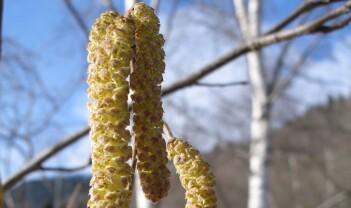 Grøn vinter – godt eller gale?