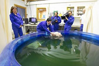 Zanellas forskning er blitt dokumentert av et TV-team fra National Geographic som ledd i en større TV-serie om dyrs behov og velferd.