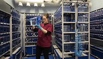 Sebrafiskene er lagret ved Norsk senter for molekylærmedisin.