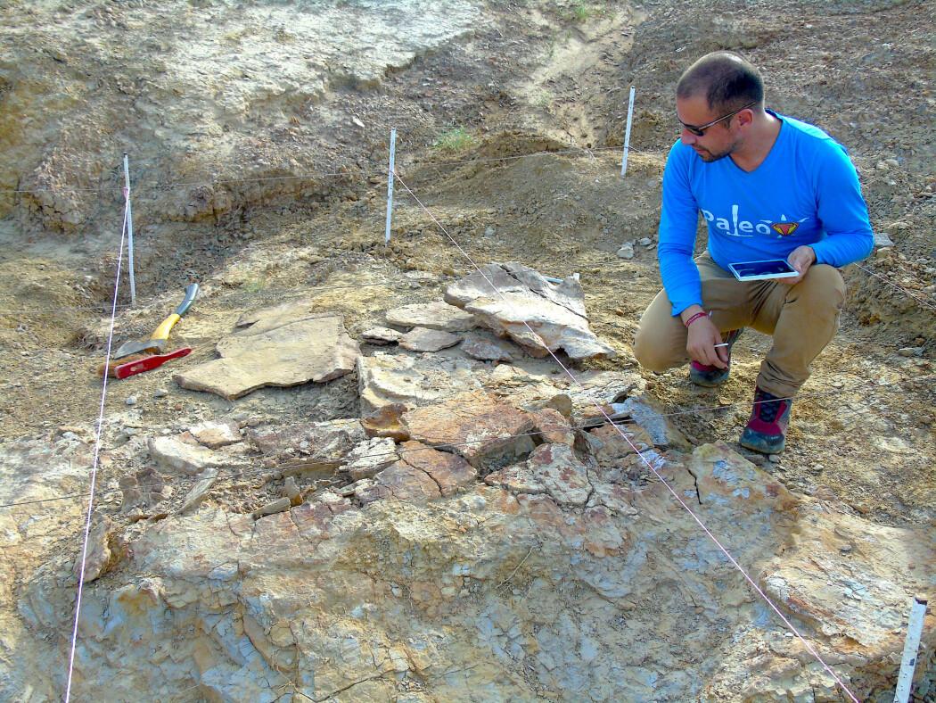 Forsker Edwin Cadena undersøker fossilet av et gigantisk skilpaddeskall. (Foto: Rodolfo Sanchez)