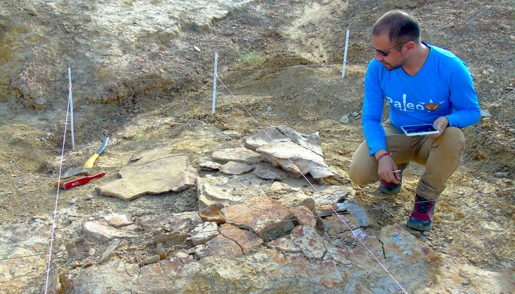 Paleontologen Edwin Cadena undersøker fossilet av et gigantisk skilpaddeskall.