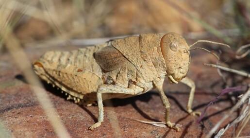 Eksperter advarer: Vi er dypt bekymret over insektdøden