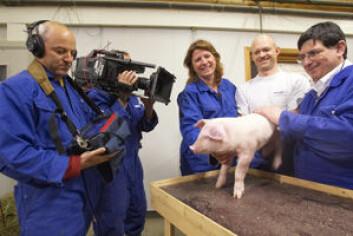 TV-opptakene ble gjort i samarbeid med etologimiljøet ved UMB, Ås. NVH og UMB har flere samarbeidsprosjekter innenfor dyrevelferd.