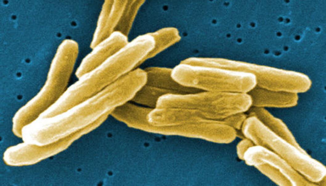 Mycobacterium tuberculosis. Janice Haney Carr