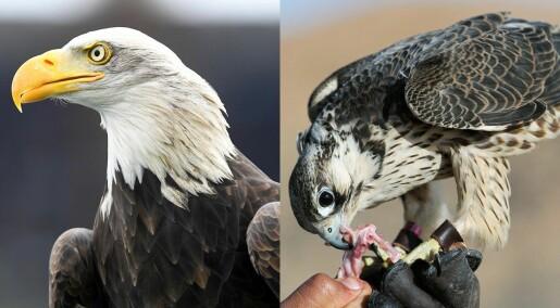Darwindagen: − Fuglenes slektstre er et stort mysterium