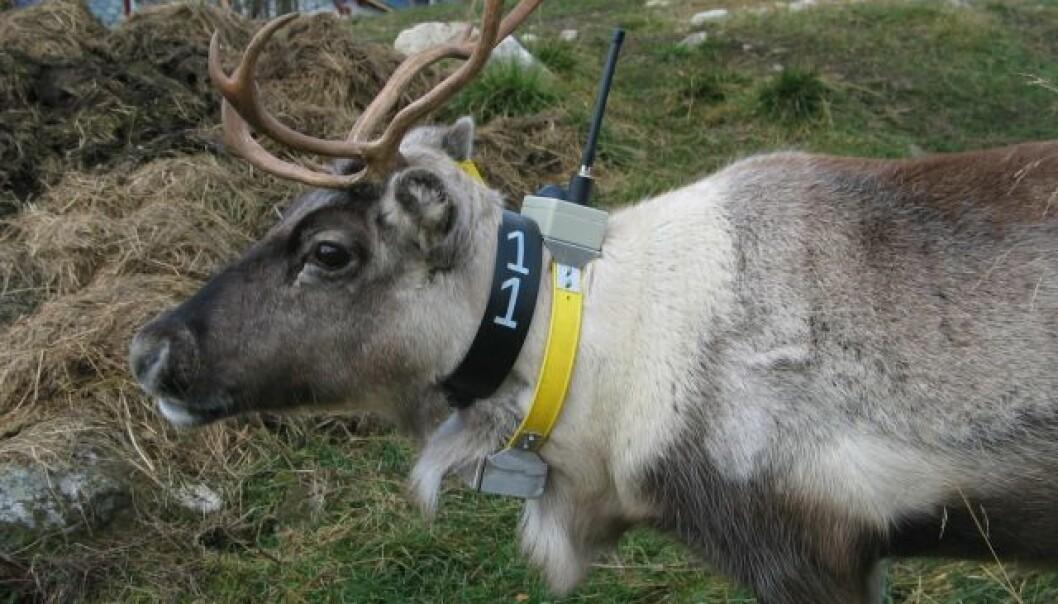 Rudolf i vanskeligheter