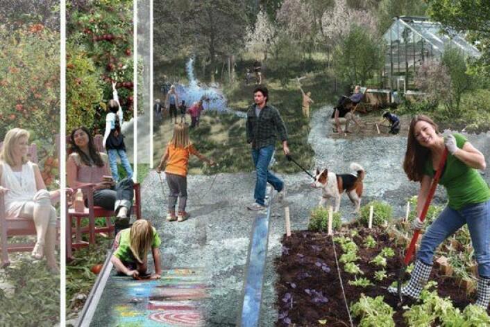 Økologi, nærmiljø og felles utnyttelse av ressurser en sentral del av Brøset. Slik har planleggere sett for seg kjøkkenhagene. (Foto: (Illustrasjon: SLA))