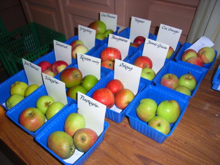 Utstilling av eplesorter. (Foto: Skog og landskap)