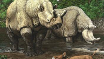 Sen-eocen i Nord-Amerika. De store neshornlignende dyrene er brontotherer. I forgrunnen en nærmere slektning av vårt neshorn, Hyracodon. (Illustrasjon: Carl Buell)