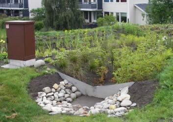 Regnbed på 40 kvadratmeter i Norges største borettslag, Risvollan i Trondheim. Det mottar overflatevann fra en ballplass og en grasbakke. Alt ligger i leire, så dette regnbedet er også drenert. (Foto: Bent Braskerud/NVE)