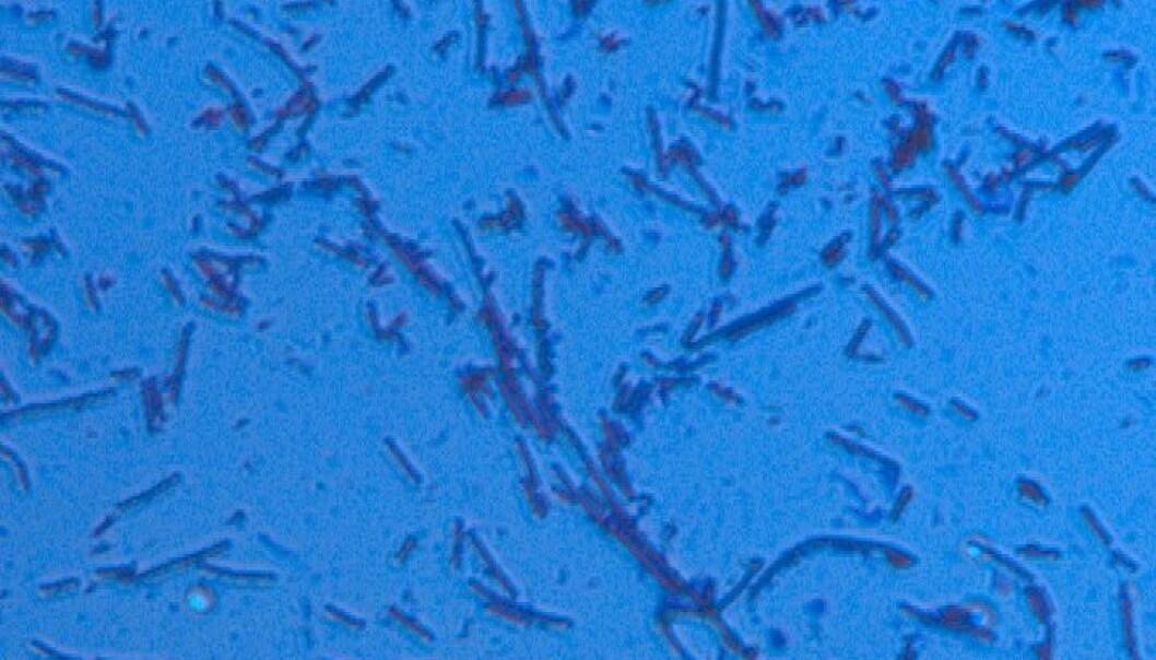 Let mikrobane få oljejobb