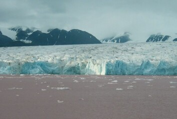 Foran Kronebreen på Svalbard kan man se tydelige spor av rosa leire i vannet. Denne leiren kan fortelle oss mye om klimaet under istiden. (Foto: Tine Rasmussen)