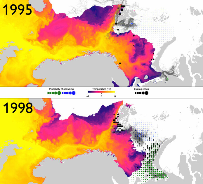 The reserachers have used models of the probable spawning sites for Polar cod (green and blue dots), observations of newborn Polar cod from survey (black dots), sea temperature and ice cover. These figures show the variation between two extreme years, 1995 and 1998.