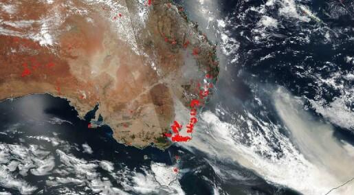 Hva skjer nå som skogbrannene i Australia er slukket?