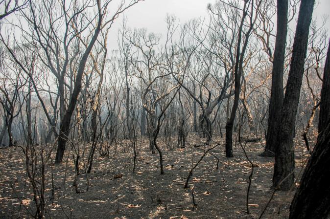 Naturen er hardt rammet etter de omfattende skogbrannene i Australia.