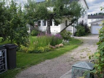 Regnbed på 7kvadretmeter i privat hage i Oslo. Det er anlagt på leirjord og er drenert. Regnbedet mottar takvann fra huset. (Foto: Bent Braskerud/NVE)