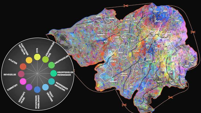 I dette kartet er hjernebarken brettet ut til en flate. Noen få hovedkategorier av ord er fargekodet, se kodenøkkelen til venstre! Kartene viser at hjernen ikke har adskilte områder for hvert ord, men overlapper dem ut fra mening. (Foto: (Figur: Huth et al., Neuron, Figure S5, hentet fra video))
