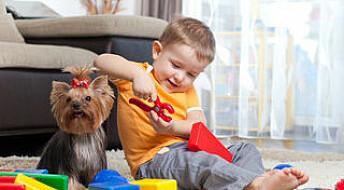 Hund gir flere typer bakterier i huset