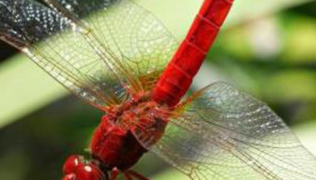 Klimaendringer jager insekter nordover