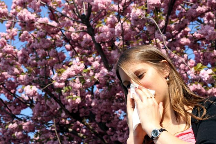Grunnlaget for allergi blir tilsynelatende lagt før vi blir født. Ny dansk forskning indikerer at det for eksempel kan bli utløst av hva mor spiste eller tok av medisiner mens du lå som foster i magen hennes. (Foto: Colourbox)