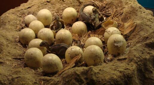 Eldgamle eggeskall støtter teorien om at dinosaurene var varmblodige